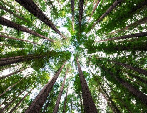 Gli alberi non possono crescere fino al cielo